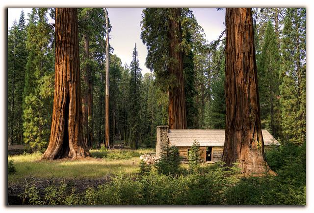 parque sequoia