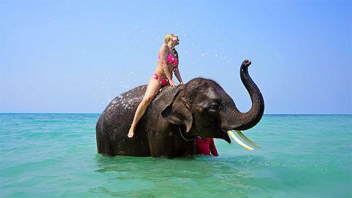 Cabalgar un elefante en Tailandia