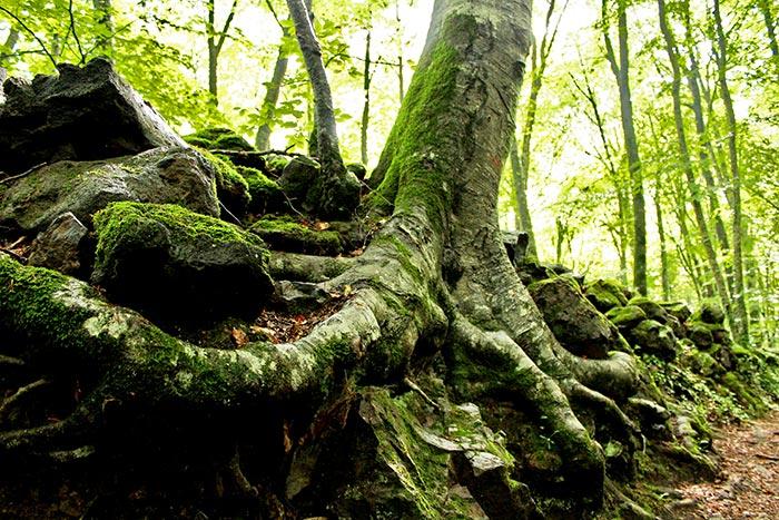 La Garrotxa: bosque con niños