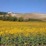 20 pueblos con encanto en Navarra