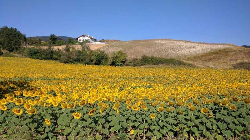 pueblos con encanto en Navarra