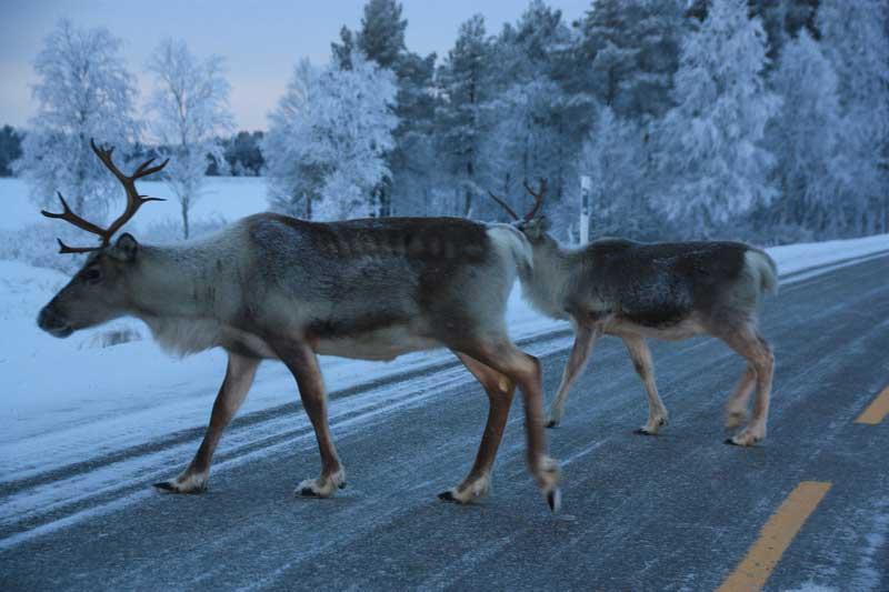 Viajar a Laponia con niños