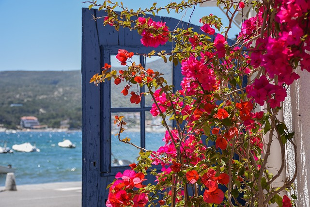 roses playa nova